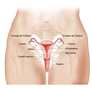 la matriz mujer: